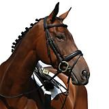 Collegiate Syntovia Flash Bridle