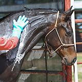 Classic Equine Grooming Wash Gloves