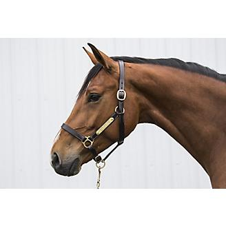 Gatsby 2-Plates Leather Halter No Snap