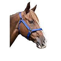 FREE Equi-Sky West Coast Halter Full Royal Blue    included free with purchase