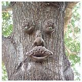 Genuine Tree Peeple Mr. Mapleshade Tree Face