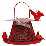 The Cardinal NoNo Bird Feeder