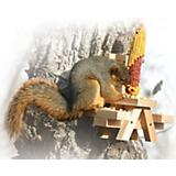 Picnic Bench Corn Feeder