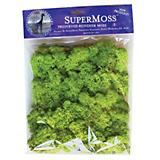 SuperMoss 4Oz Reindeer Moss Chartreuse