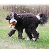 KONG Swirl Boomerang Dog Toy