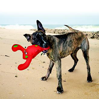 KONG Belly Flops Dog Toy