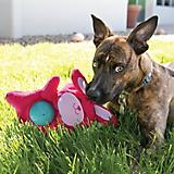 KONG Sqrunch Bellies Dog Toy