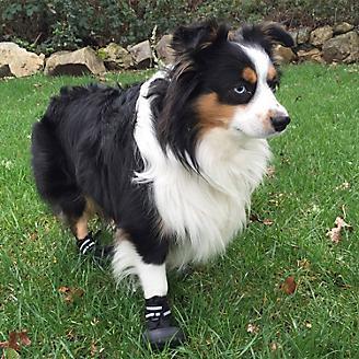 Doggles Black Dog Boots
