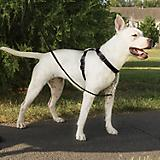 PetSafe 3in1 Dog Harness Small Teal