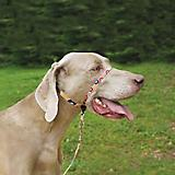 Gentle Leader Chic Dog Headcollar