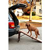 Pet Gear Free Standing Pet Ramp