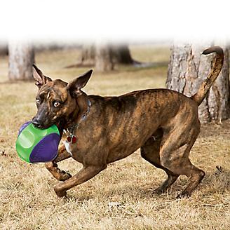 KONG Babbler Dog Toy