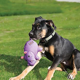 KONG Phatz Dog Toy