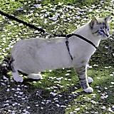 PetSafe Come With Me Kitty Harness Small Blue