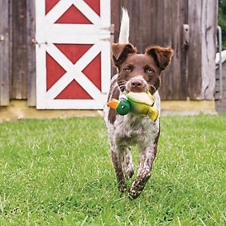 PetSafe Sportsmen Latex Meeze Dog Toy