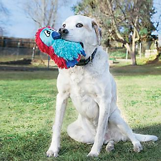 KONG DoDo Quirky Medium Dog Toy