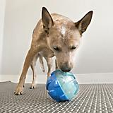 KONG Rewards Ball Dog Toy