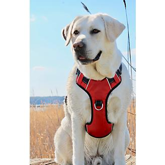 Baydog Chesapeake Dog Harness