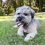 KONG CrunchAir Ball Dog Toy