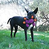 KONG Roughskinz Crab Dog Toy