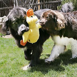 KONG Comfort Jumbo Assorted XLarge Dog Toy