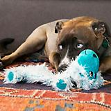 KONG Low Stuff Scruffs Large Dog Toy