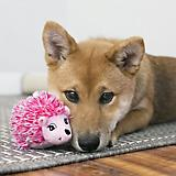 KONG Comfort HedgeHug Assorted Puppy Toy