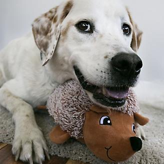 KONG Comfort HedgeHug Assorted Dog Toy