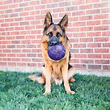 KONG Flexball Medium/Large Dog Toy