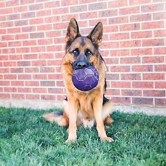 KONG Flexball Medium/Large Dog Toy