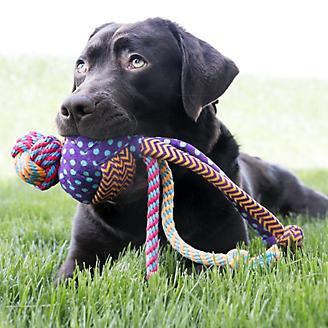 KONG Wubba Medley Dog Toy