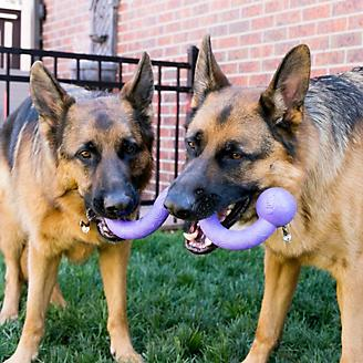 KONG Ogee Stick Assorted Dog Toy