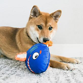 KONG Reefz Assorted Dog Toy