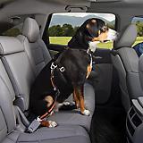 Kurgo Direct to Seatbelt Swivel Tether