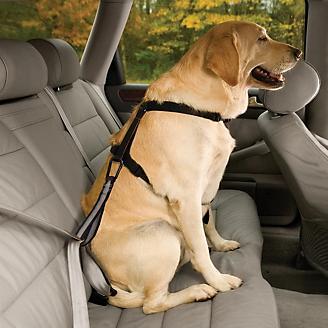 Kurgo Seatbelt Tether w/Carabiner