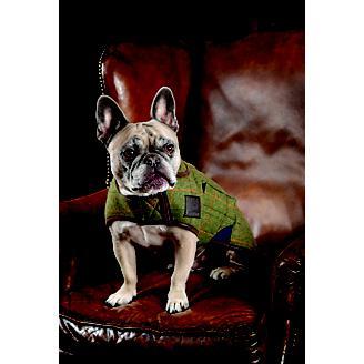 Digby and Fox Tweed Dog Coat