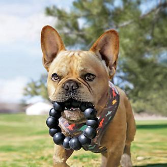 KONG Extreme Ring Dog Toy