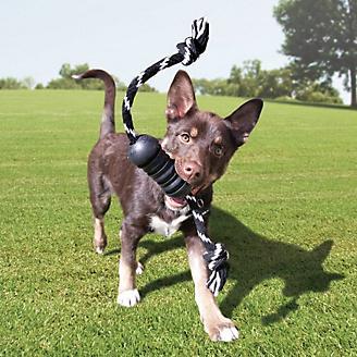 KONG Extreme Dental w/Rope Dog Toy