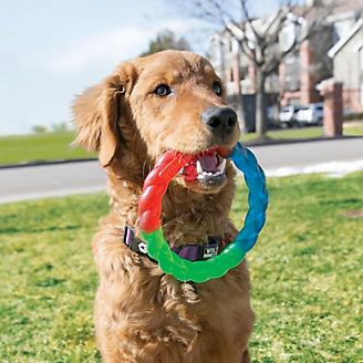 KONG Twistz Ring Dog Toy