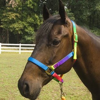 PREMIUM TRIPLE PLY NYLON DELUXE PONY SIZE HORSE HALTER GREAT WITH SADDLE