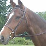 Collegiate Square Raised Bridle