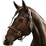 HDR Pro Fancy Padded Rolled Throat Halter Pony Bla