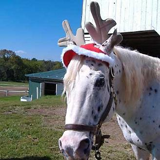 Christmas Horse Tack.Holiday Horse Antlers