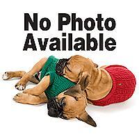 Image of Nylabone Dura Chew Original Dog Chew Wolf