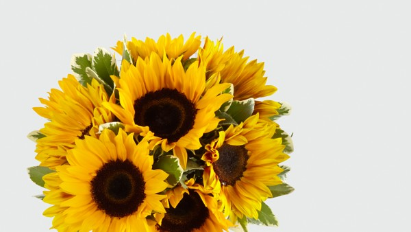 Endless Summer Sunflower Bouquet - Thumbnail 4 Of 5