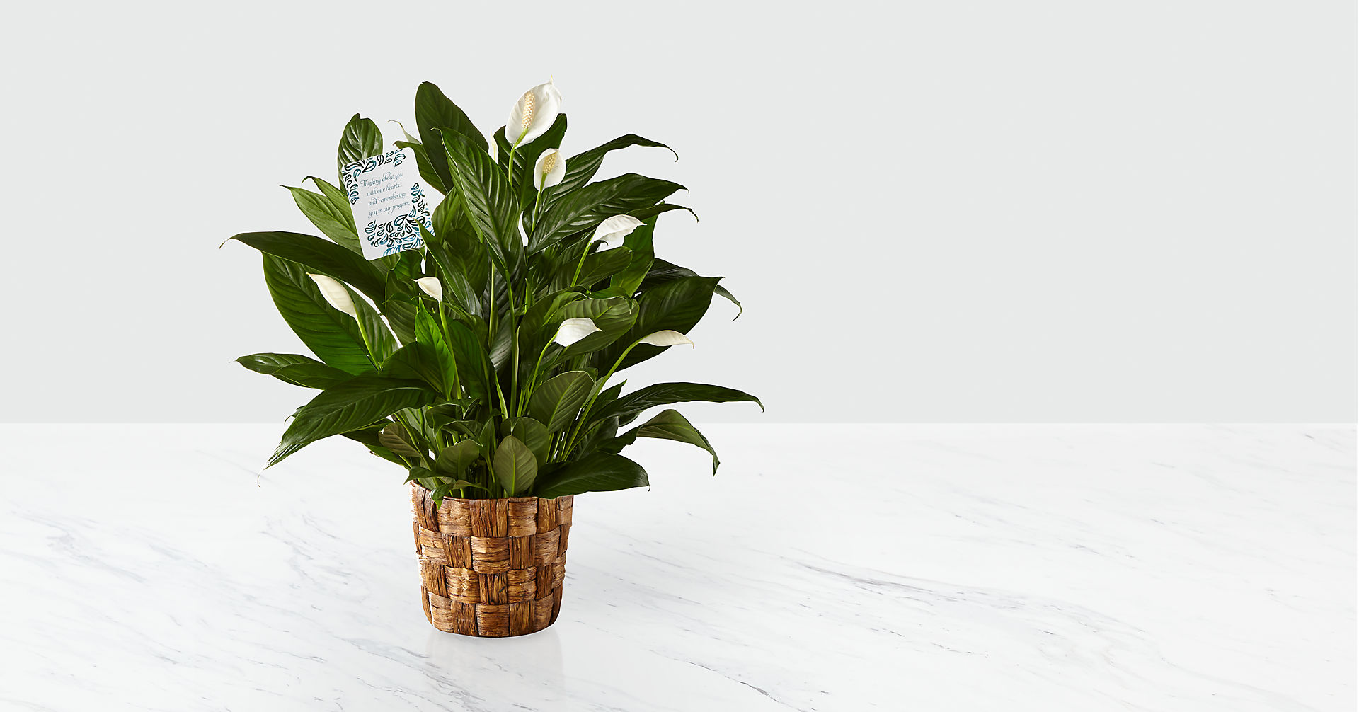DaySpring® Sincere Sympathies Peace Lily - Image 1 Of 2