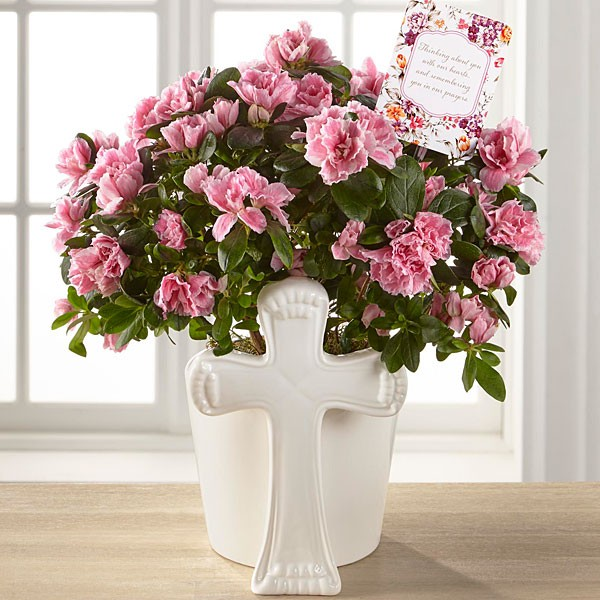 DaySpring® Always in Our Hearts Sympathy Azalea - Image 1 Of 2