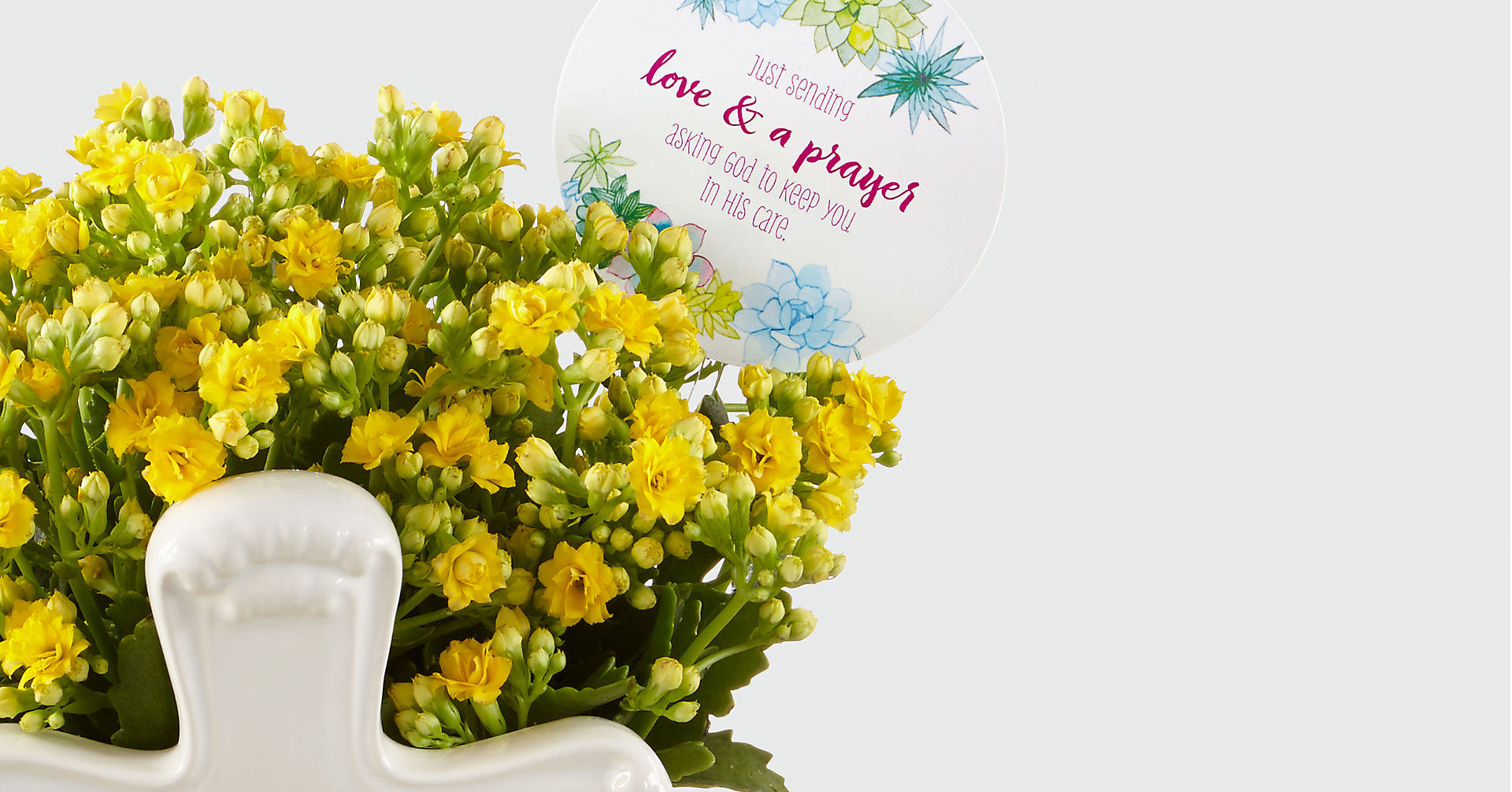DaySpring® Brighter Days Kalanchoe - Image 2 Of 2