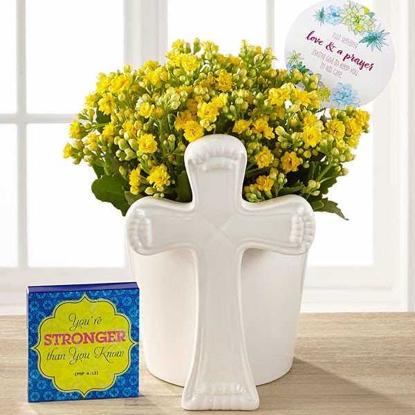 DaySpring Brighter Days Kalanchoe - Image 1 Of 3