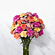 Sweet CarnationsBouquet - VASE INCLUDED - Thumbnail 2 Of 4